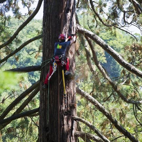 Baumpflege  ederer.cc - Baumpflege und Spezial-Einsätze im Forstbereich